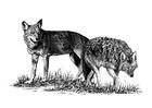 Kleurplaat wolven