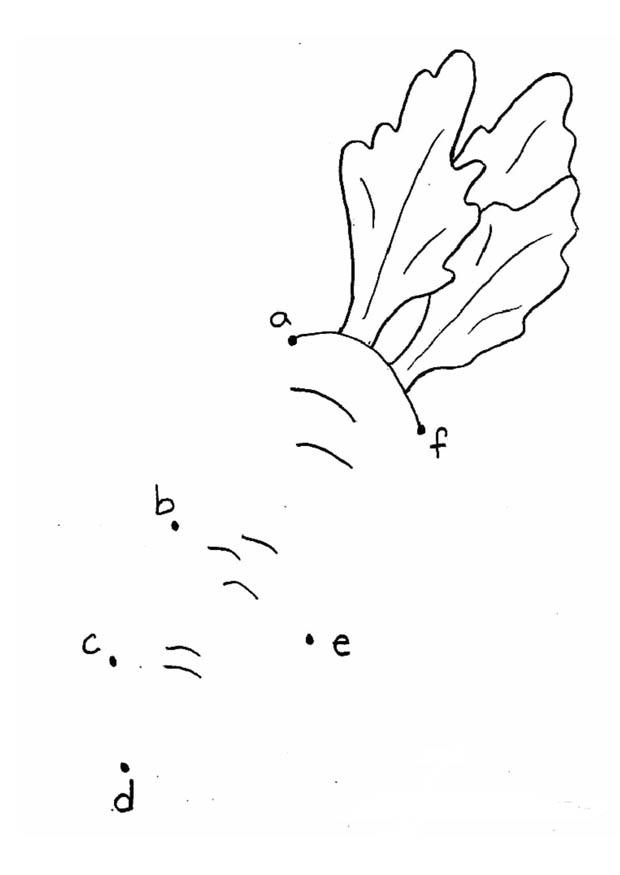 Afbeelding Vogel Kleurplaat Kleurplaat Wortel Letters Afb 21859