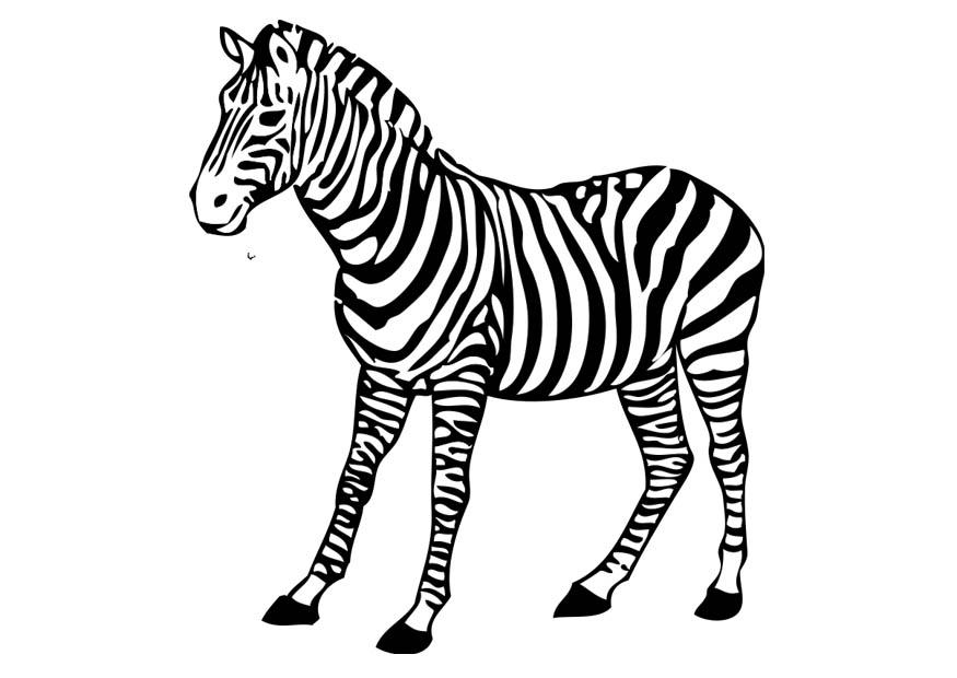 Kleurplaat Zebra Afb 17394