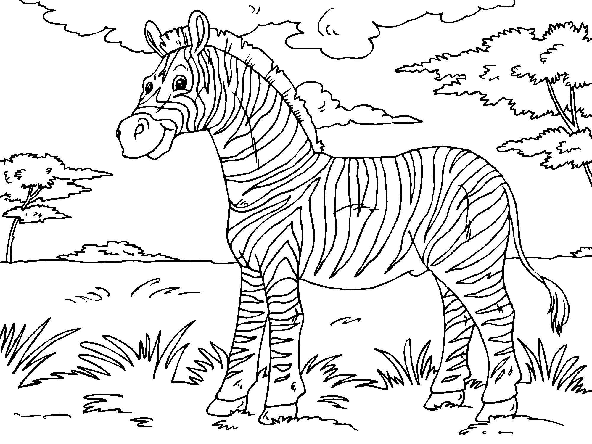 Kleurplaat Jungle Dieren Kleurplaat Zebra Afb 23013 Images