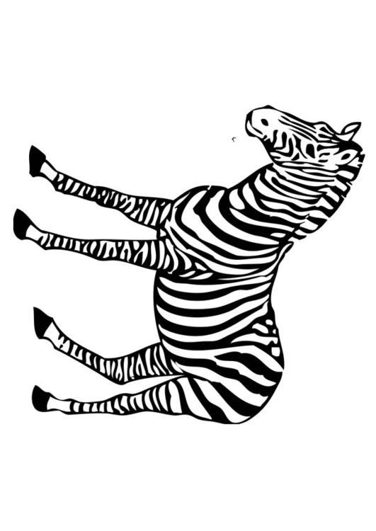 Grote Mensen Kleurplaat Dieren Kleurplaat Zebra Afb 17394
