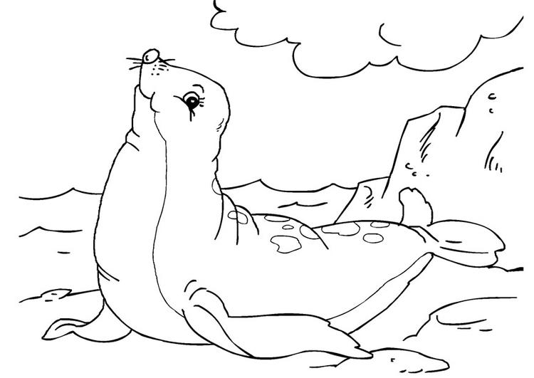kleurplaat zeehond afb 27234