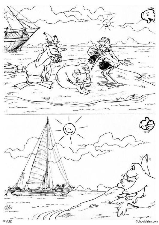 [Get 23+] Afbeelding Zeehond Tekening