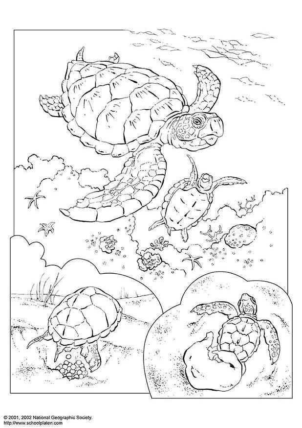 kleurplaat zeeschildpad afb 3083