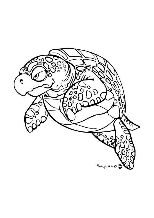 Kleurplaten Zeeschildpad.Kleurplaat Zeeschildpad Afb 9016