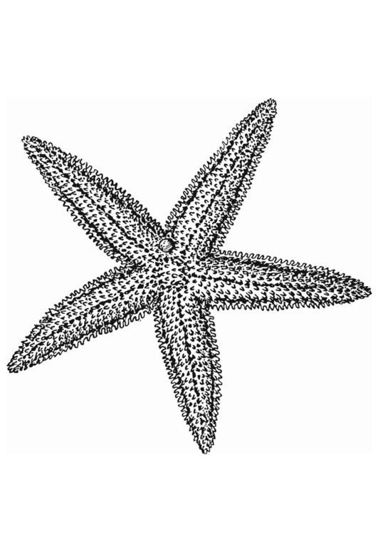 starfish drawing pencil