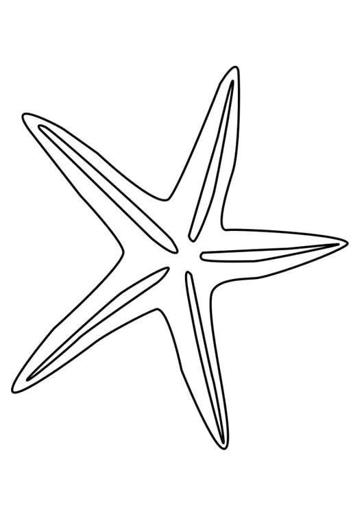 Kleurplaten Zeesterren.Kleurplaat Zeester Afb 27185