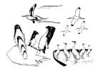 Kleurplaat zeevogels