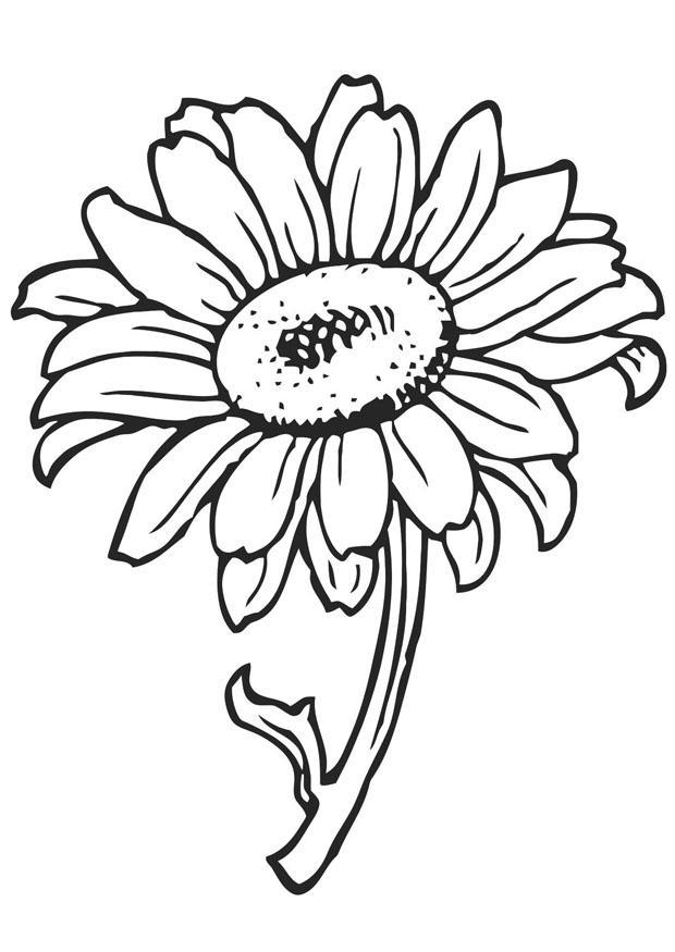 Kleurplaten Zonnebloemen.Kleurplaat Zonnebloem Kleurplaat Zonnebloem Afb 21202 Kleurplatenl Com