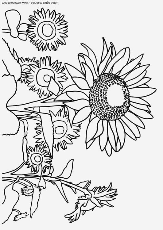 Kleurplaten Zonnebloemen.Kleurplaat Zonnebloemen Afb 9791