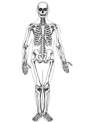Kleurplaat menselijk skelet